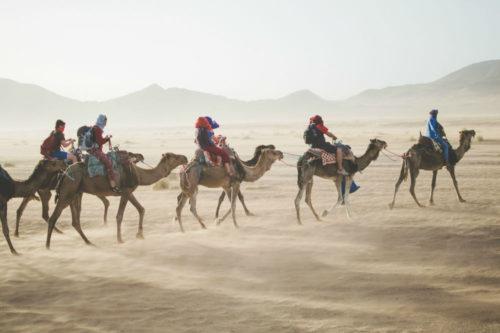 camels 1000 x 666